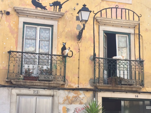 Leiria neighborhood of cats