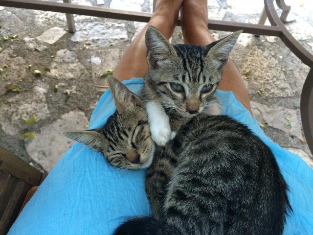 Kittens at Villa Kerasia