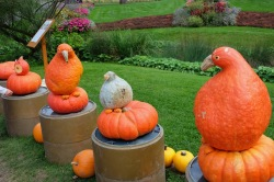 Pumpkinfest creations - Ludwigsburg, Germany