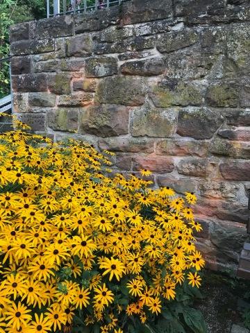Sunflowers in Leonsberg, Germany