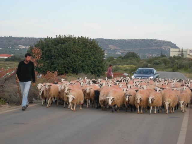 cretan traffic jam